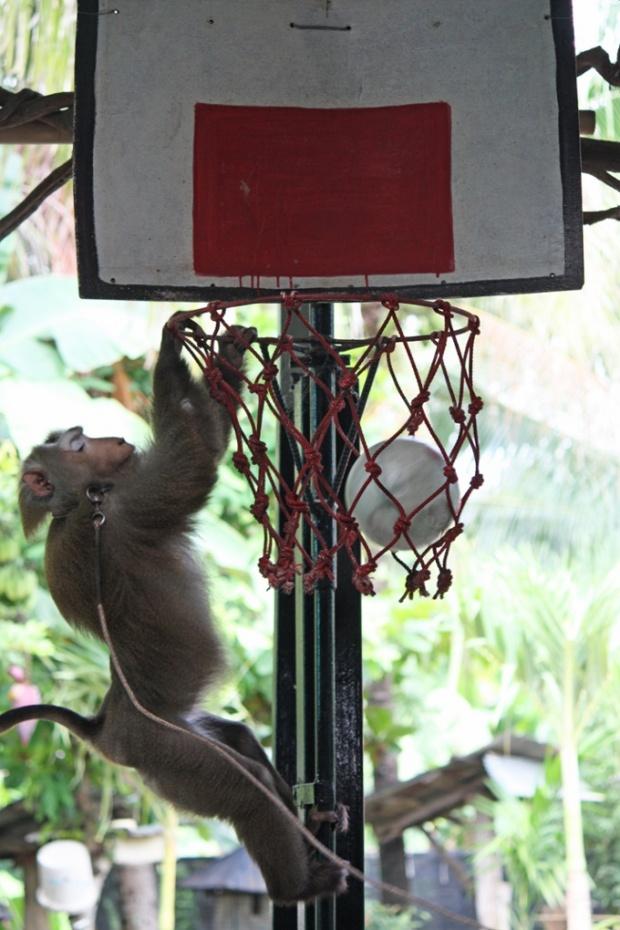 monkey-ball